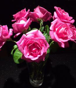 Vivid fuchsia pink roses ... a beautiful surprise